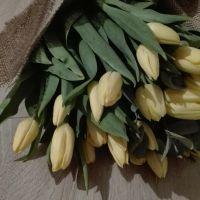Bukiet z 30 żółtych tulipanów
